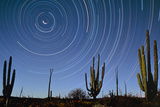 Star Trails Over Cacti Print by David Nunuk