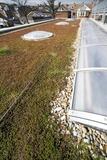 Sedum Living Roof Photographic Print by Rapson Rapson