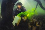 Underwater Research Fotografisk tryk af Alexis Rosenfeld