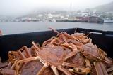 Snow Crabs, Canada Poster by David Nunuk