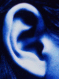 Human Ear Photographic Print by  PASIEKA