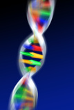 DNA Molecule Photographic Print by  PASIEKA