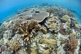 Coral Reef Community Photographic Print by Matthew Oldfield