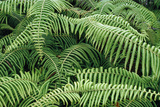 Fern Branches Posters by Magrath Photography
