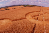 Crop Formation, Cheesefoot, Hampshire Print by David Parker