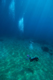 Scuba Diving Photographic Print by Matthew Oldfield