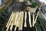 Timber Coming From a Saw Line At Sawmill Print by Ria Novosti