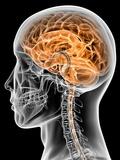 PASIEKA - Internal Brain Anatomy, Artwork Fotografická reprodukce