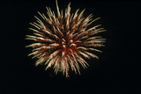 4th of July Fireworks Print by Magrath Photography