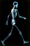 Human Skeleton Walking Photographic Print by  PASIEKA