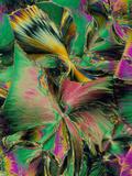 Folic Acid Crystals Photographic Print by  PASIEKA