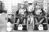 Bion 7 Experiment Fotografisk trykk av Ria Novosti