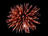 Fireworks Photographic Print by Magrath Photography