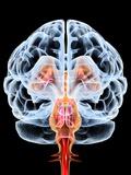 Brain, Artwork Photographic Print by  PASIEKA