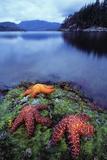 Starfish Posters by David Nunuk