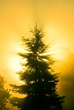 Trees In Fog At Sunrise Photographic Print by David Nunuk