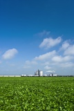 Corn Ethanol Processing Plant Poster by David Nunuk
