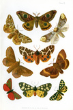 British Moths, Illustration Photographic Print by Maria Platt-Evans