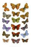 British Butterflies, 1897 Prints by Maria Platt-Evans