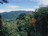View Across Rainforest In Trinidad Photographic Print by Dr. Morley Read