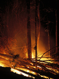 Forest Fire Photographic Print by Dr. Morley Read