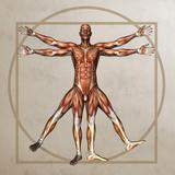 Male Musculature, Artwork Photographic Print by Friedrich Saurer