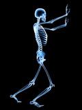 Human Skeleton Photographic Print by  PASIEKA