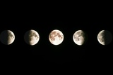 Composite Image of the Phases of the Moon Reproduction photographique par John Sanford