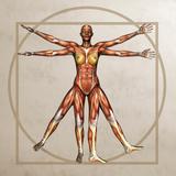 Female Musculature, Artwork Photographic Print by Friedrich Saurer