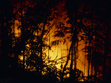 Forest Fire Burning In Rainforest Photographic Print by Dr. Morley Read