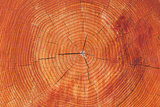 Growth Rings of a Scots Pine Tree Posters by Duncan Shaw