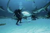 Shark Feeding Posters by Alexis Rosenfeld