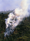 View of a Forest Fire In the Amazonian Rainforest Photographic Print by Dr. Morley Read