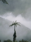 Area of Cleared Cloudforest, Juval Valley, Ecuador Photographic Print by Dr. Morley Read