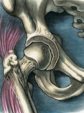 Hip Joint, Artwork Fotodruck von Bill Sanderson