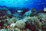 Coral Reef Photographic Print by Alexis Rosenfeld