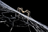 Cave Spider on Web Photographic Print by Robbie Shone