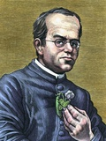 Gregor Mendel, Austrian Botanist Photographic Print by Bill Sanderson