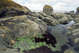 Tide Pool Prints by Peter Scoones