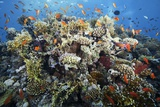 Reef Scene Photographic Print by Alexander Semenov