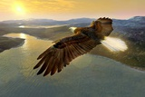 Bald Eagle In Flight, Artwork Photographie par Studio Macbeth