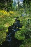 Forest Stream Prints by Alan Sirulnikoff