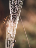 Spider's Web Photographic Print by Alan Sirulnikoff
