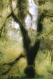 Moss-covered Tree Photographic Print by Alan Sirulnikoff