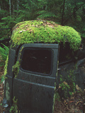 Moss-covered Truck Photographic Print by Alan Sirulnikoff