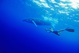 Humpback Whale with a Snorkeler Posters by Alexis Rosenfeld