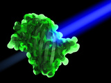 Green Fluorescent Protein Prints by Phantatomix