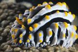 Sea Slug Fotografisk tryk af Alexis Rosenfeld