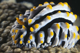 Sea Slug Posters by Alexis Rosenfeld