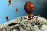 Bacteriophage Viruses Photographic Print by Karsten Schneider
